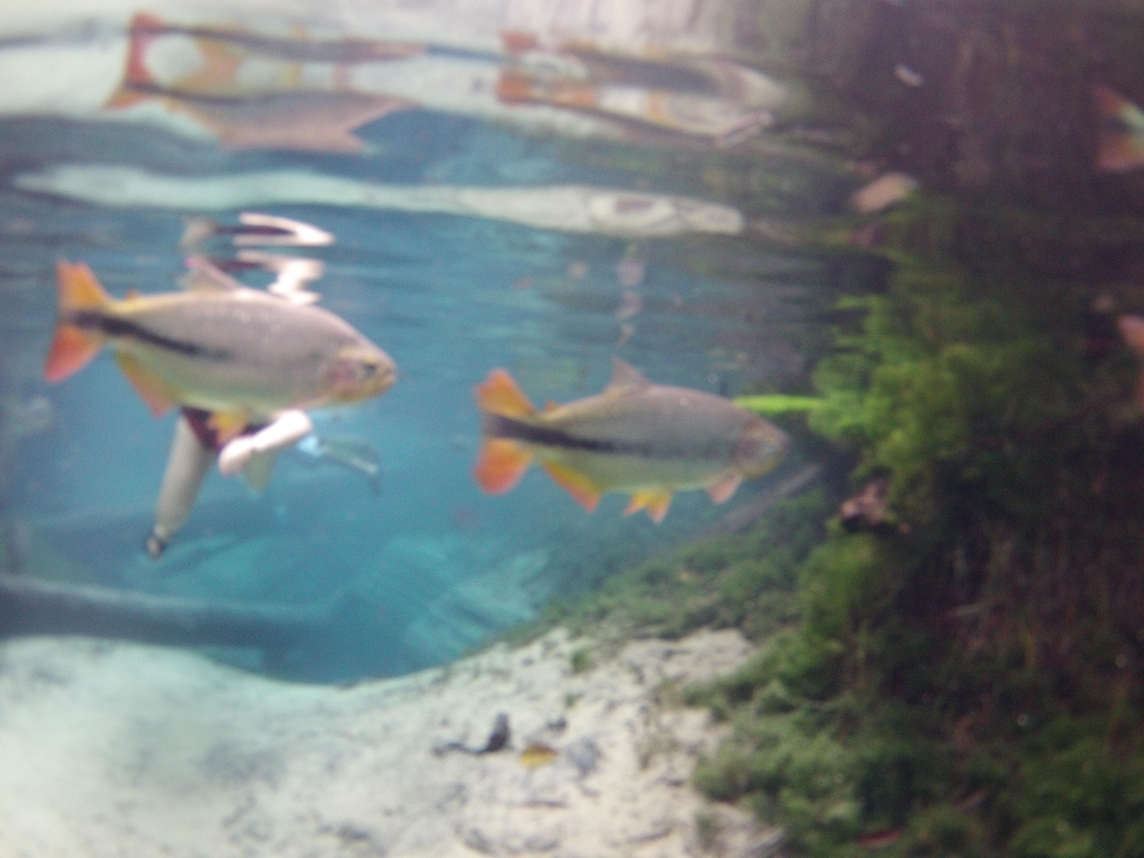 aquario 2.JPG
